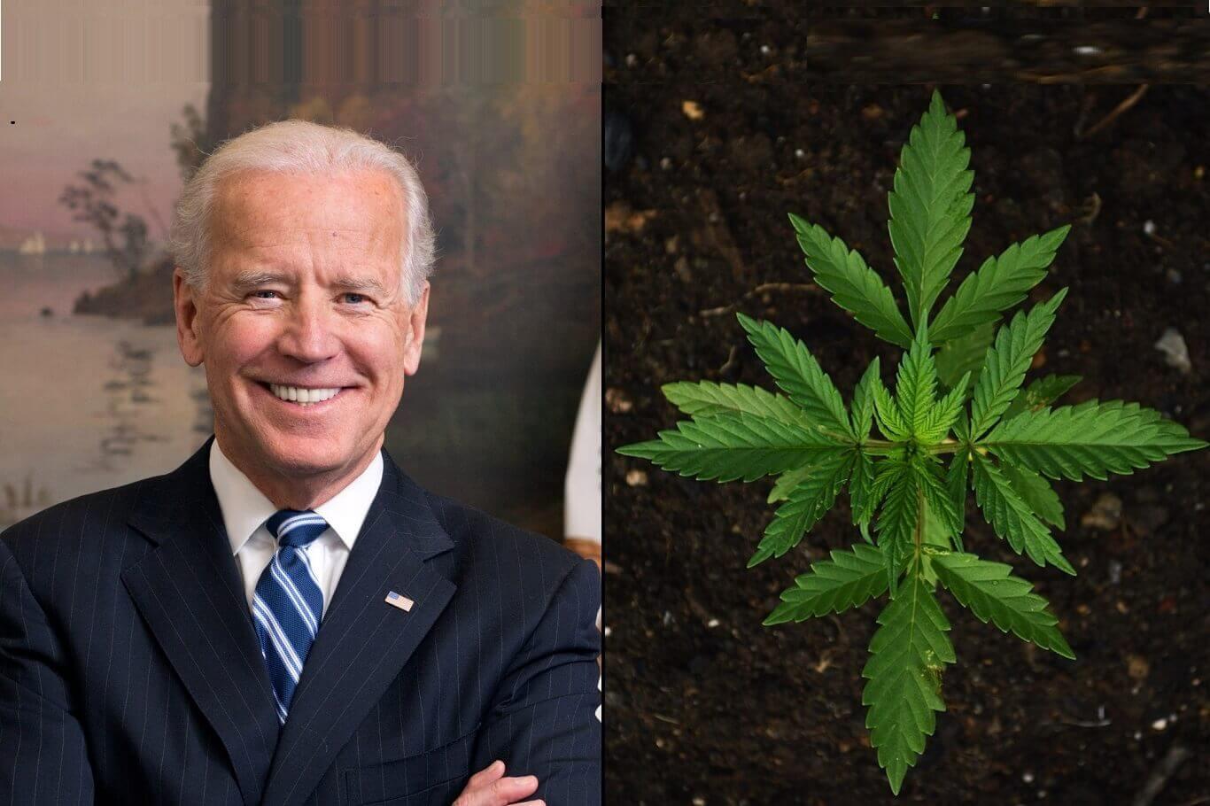 Biden marijuana