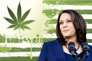 Kamala Harris Marijuana