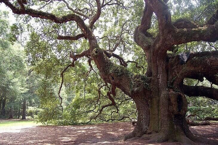 The-Living-Tree-Doctrine