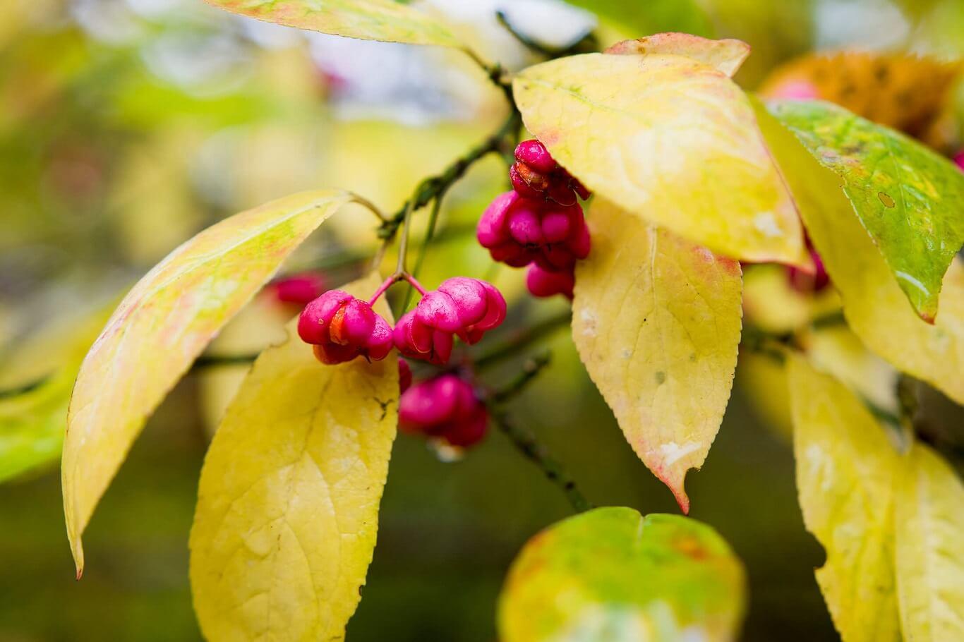fruit of the poisonous tree doctrine.