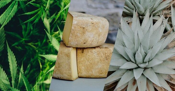 Cannabis Appellations Program