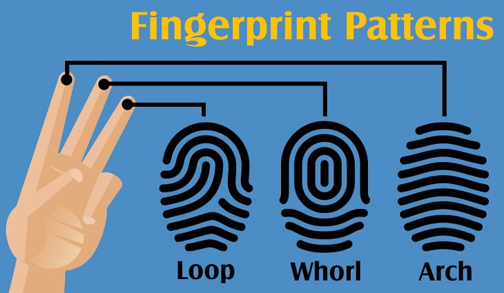 types-of-fingerprint-patterns